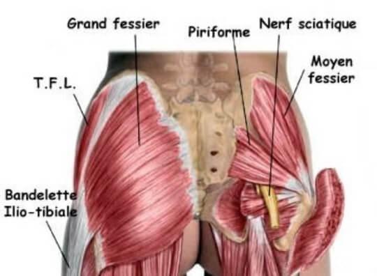 Connu Étirer le muscle piriforme pour apaiser la sciatique KA28